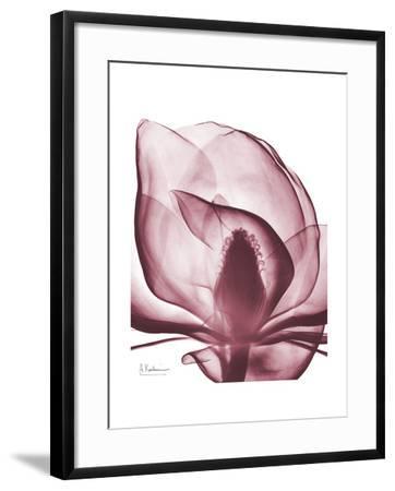 Marcela Magnolia-Albert Koetsier-Framed Art Print