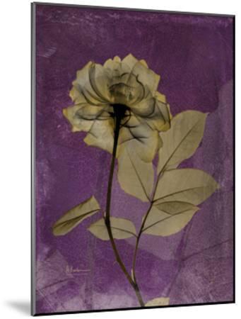 Purple Opus Rose-Albert Koetsier-Mounted Premium Giclee Print