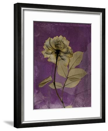 Purple Opus Rose-Albert Koetsier-Framed Premium Giclee Print