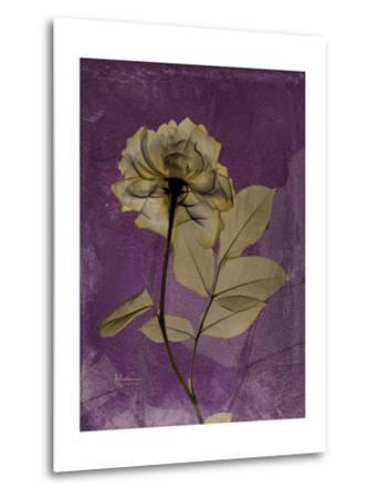 Purple Opus Rose-Albert Koetsier-Metal Print