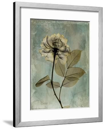 Sage Opus Rose-Albert Koetsier-Framed Premium Giclee Print