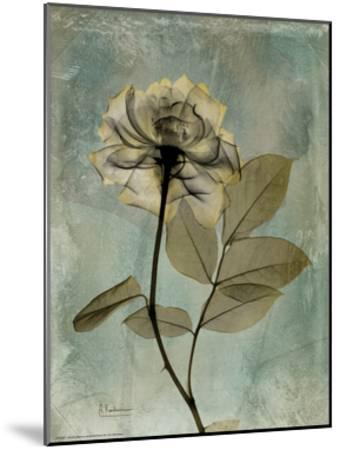 Sage Opus Rose-Albert Koetsier-Mounted Premium Giclee Print