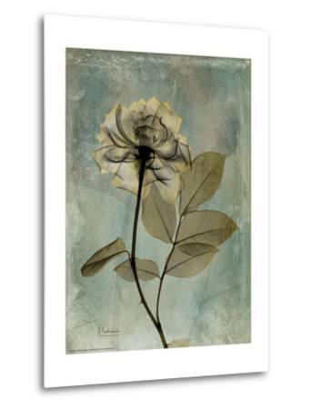 Sage Opus Rose-Albert Koetsier-Metal Print