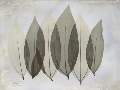 The Grays 5-Albert Koetsier-Stretched Canvas Print