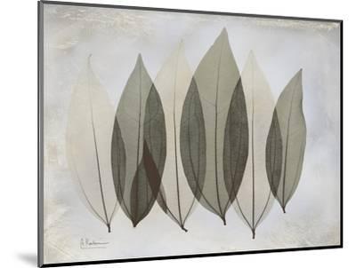 The Grays 5-Albert Koetsier-Mounted Premium Giclee Print