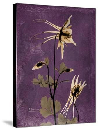 Purple Opus Columbine-Albert Koetsier-Stretched Canvas Print