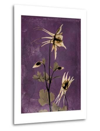 Purple Opus Columbine-Albert Koetsier-Metal Print