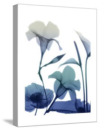 Morning Bloom 1-Albert Koetsier-Stretched Canvas Print
