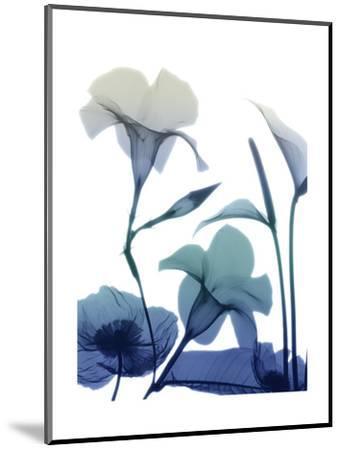 Morning Bloom 1-Albert Koetsier-Mounted Art Print