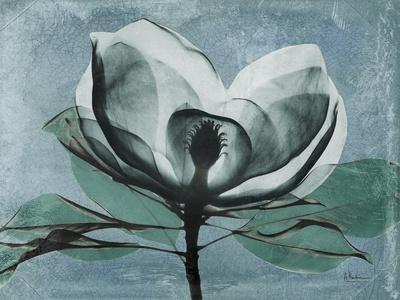 Magnolia Blues 1-Albert Koetsier-Stretched Canvas Print