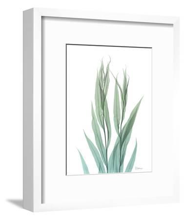 Radiant Bamboo Leaf 2-Albert Koetsier-Framed Art Print
