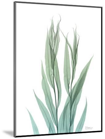 Radiant Bamboo Leaf 2-Albert Koetsier-Mounted Art Print