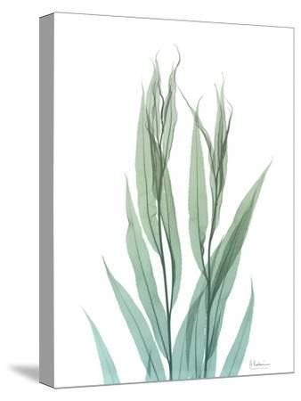 Radiant Bamboo Leaf 2-Albert Koetsier-Stretched Canvas Print