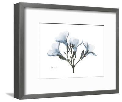 Oleander Portrait-Albert Koetsier-Framed Premium Giclee Print