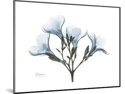 Oleander Portrait-Albert Koetsier-Mounted Premium Giclee Print