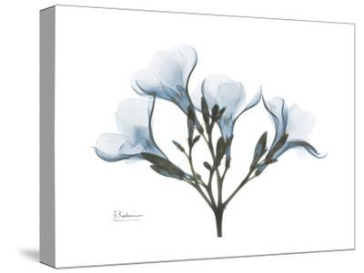 Oleander Portrait-Albert Koetsier-Stretched Canvas Print