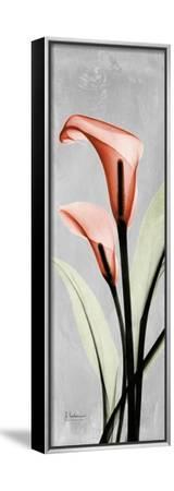 Gray Calla Lily 2-Albert Koetsier-Framed Stretched Canvas Print