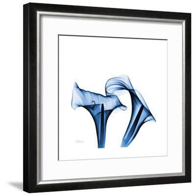Calla Lilies Indigo-Albert Koetsier-Framed Premium Giclee Print