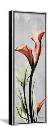 Gray Calla Lily 1-Albert Koetsier-Framed Stretched Canvas Print