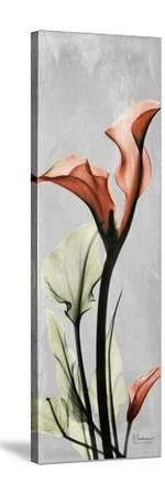 Gray Calla Lily 1-Albert Koetsier-Stretched Canvas Print