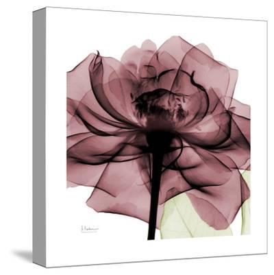 Chianti Rose-Albert Koetsier-Stretched Canvas Print
