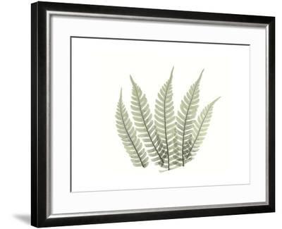 Tree Fern Portrait 4-Albert Koetsier-Framed Premium Giclee Print