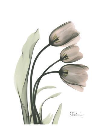 Soft Tulip Portrait 1-Albert Koetsier-Framed Art Print