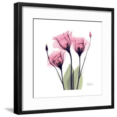 Pink Gentian-Albert Koetsier-Framed Art Print