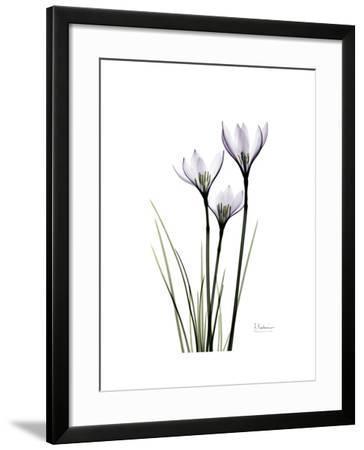 Whit Rain Lily Portrait-Albert Koetsier-Framed Premium Giclee Print