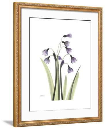 Snowdrop Portrait-Albert Koetsier-Framed Premium Giclee Print