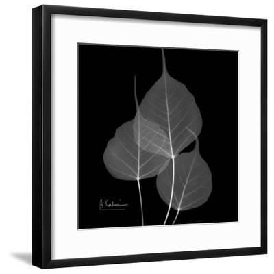 Xray Bo Tree-Albert Koetsier-Framed Premium Giclee Print