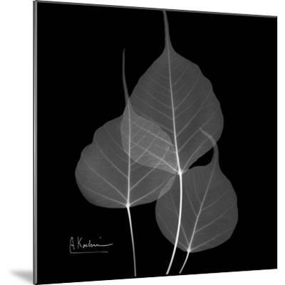 Xray Bo Tree-Albert Koetsier-Mounted Premium Giclee Print