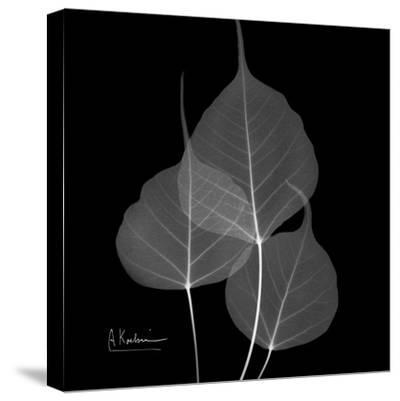 Xray Bo Tree-Albert Koetsier-Stretched Canvas Print
