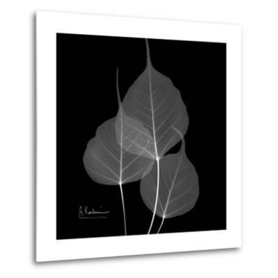 Xray Bo Tree-Albert Koetsier-Metal Print