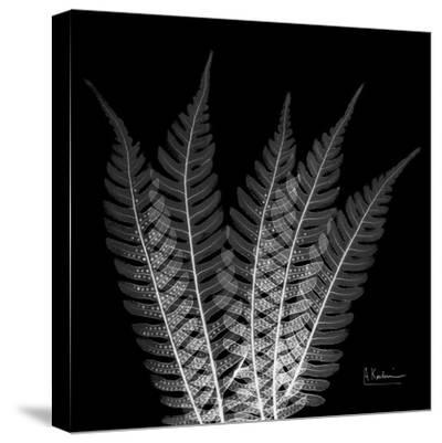 Xray Tree Fern-Albert Koetsier-Stretched Canvas Print