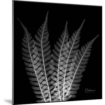 Xray Tree Fern-Albert Koetsier-Mounted Premium Giclee Print