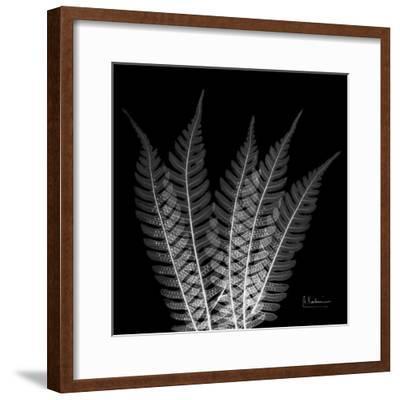 Xray Tree Fern-Albert Koetsier-Framed Premium Giclee Print