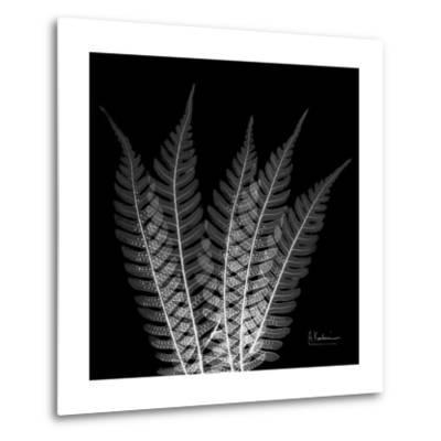 Xray Tree Fern-Albert Koetsier-Metal Print