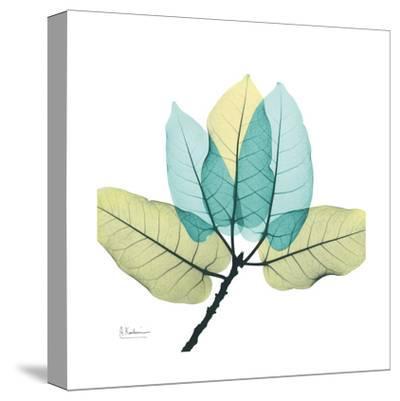 Ficus Burkey-Albert Koetsier-Stretched Canvas Print