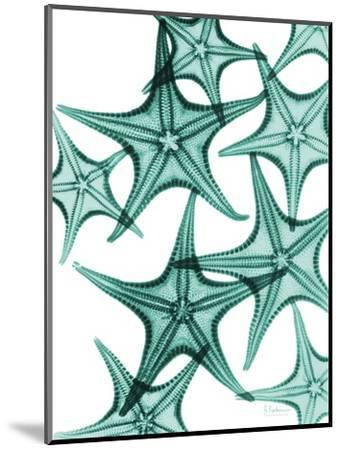 Starfish-Albert Koetsier-Mounted Premium Giclee Print