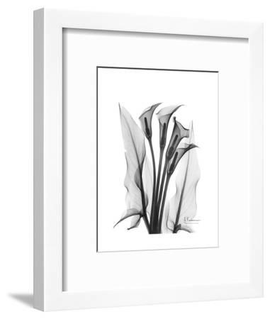 Calla Lily Gray-Albert Koetsier-Framed Premium Giclee Print