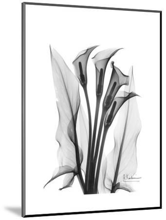 Calla Lily Gray-Albert Koetsier-Mounted Premium Giclee Print