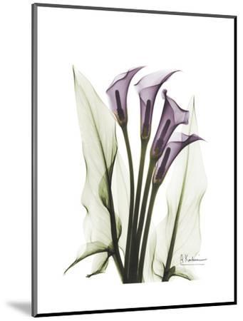 Purple Calla Lily Portrait-Albert Koetsier-Mounted Premium Giclee Print