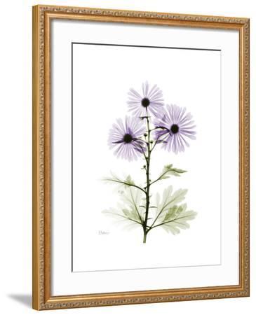 Chrysanthemum Trio-Albert Koetsier-Framed Premium Giclee Print