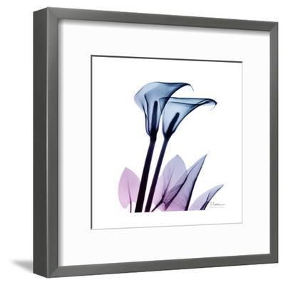 Calla Lily Purp-Albert Koetsier-Framed Art Print