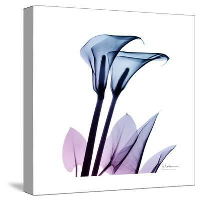 Calla Lily Purp-Albert Koetsier-Stretched Canvas Print