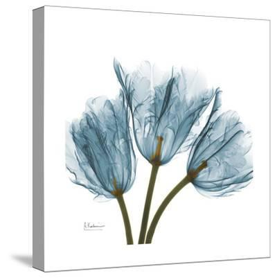 Tulips Blue-Albert Koetsier-Stretched Canvas Print