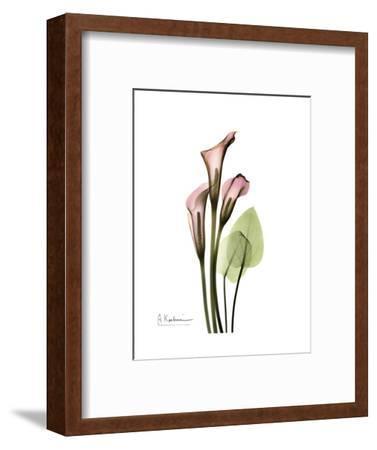 Pink Calla Lily Portrait-Albert Koetsier-Framed Premium Giclee Print