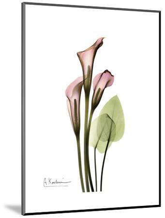 Pink Calla Lily Portrait-Albert Koetsier-Mounted Premium Giclee Print