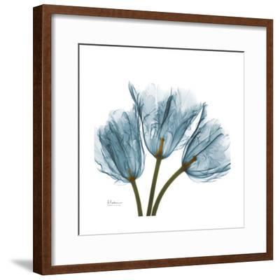 Tulips Blue-Albert Koetsier-Framed Premium Giclee Print